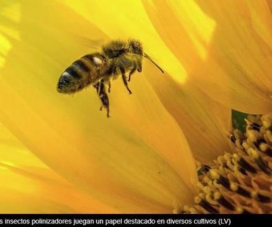 La UE activa un plan para frenar el declive de los insectos polinizadores