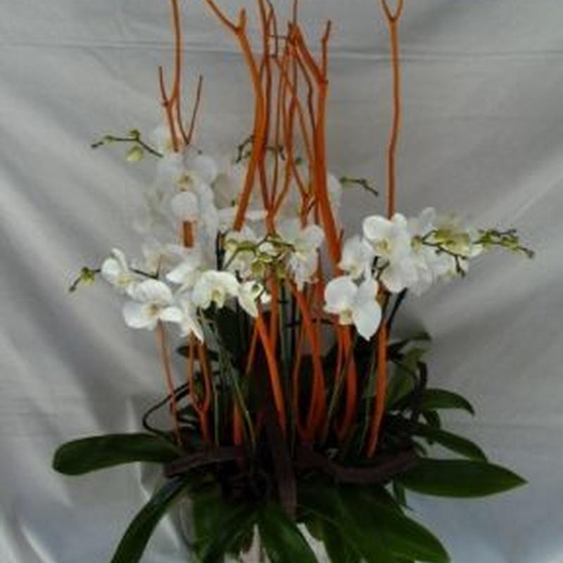 Alquiler de plantas : Productos de Flores Madrid