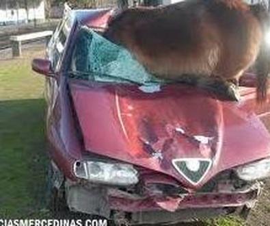 Los jabalíes provocan el 33% de los atropellos a animales en carretera. Jose Antonio martin Grande