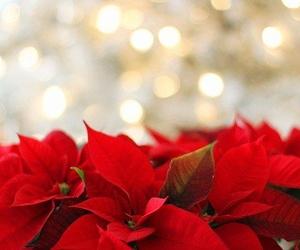 Un catering salvará tu Navidad