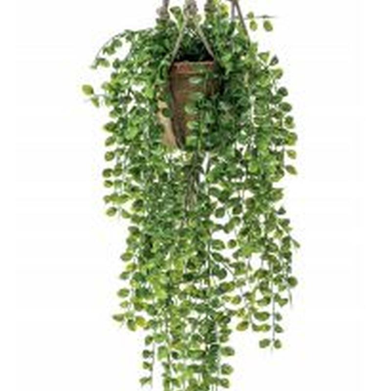 Planta decorativa techo 420809: ¿Qué hacemos? de Ches Pa, S.L.