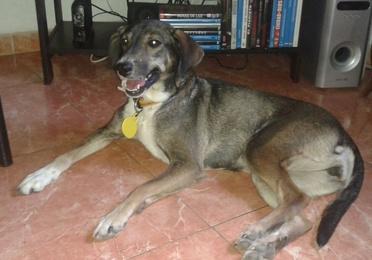 Epilepsia Canina.