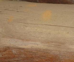 Carcoma de los muebles
