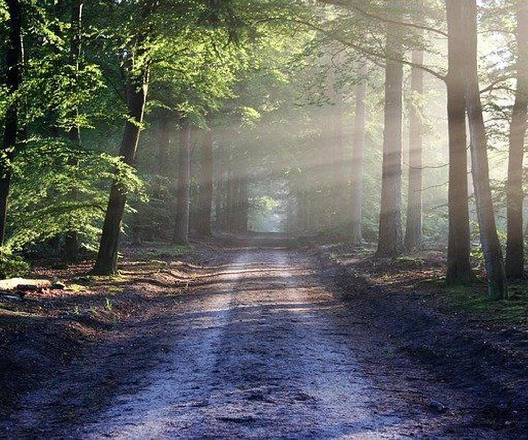 La naturaleza como factor de crecimiento personal
