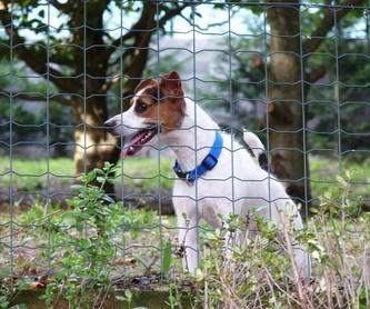 Estancia para perros: Servicios de Errekagane Residencia Canina