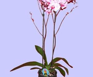 Galería de Floristerías en Madrid | Flores Tere
