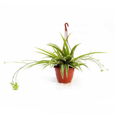 Tienda online: Garden La Palma