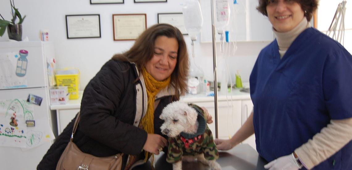 Consulta veterinaria en Sevilla - C. Veterinario Triana
