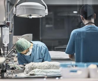 Diagnósticos por imagen: Servicios de La Chopera Hospital Veterinario