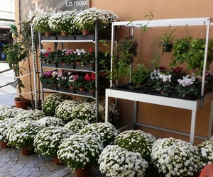 Jardinería en Palma de Mallorca