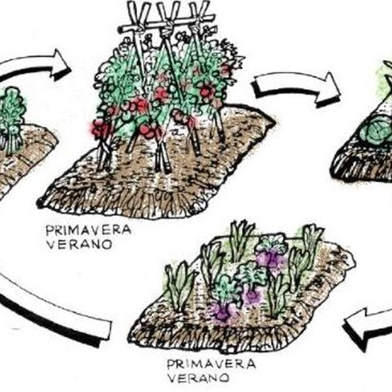 Rotaciones de cultivo:  de Huertos Azor