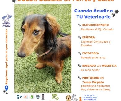 DOLOR OCULAR en Perros y Gatos: Cuándo Acudir a TU Veterinario