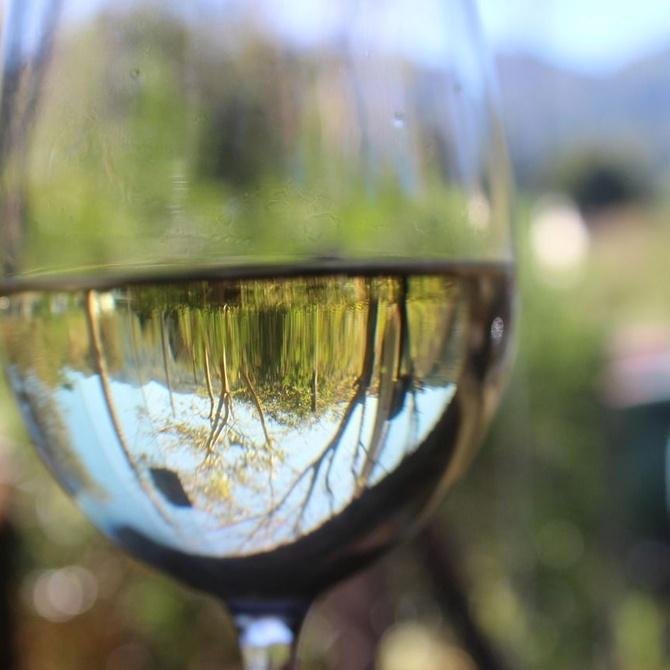 El vino Blanco Monterrei