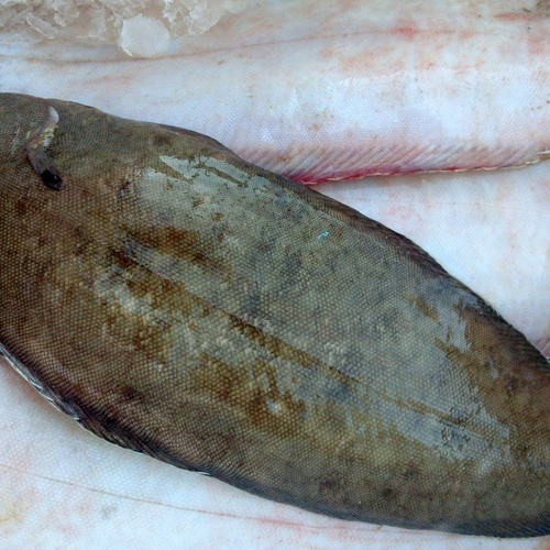 Comer buen pescado en Sevilla