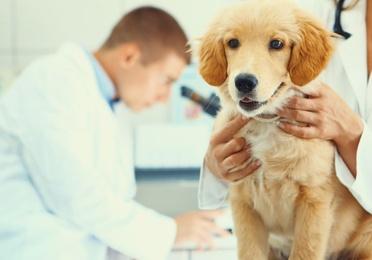 Análisis clínicos y laboratorio propio