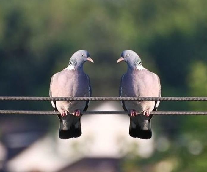 Tratamientos para la protección frente a aves: Servicios  de Ecoserra