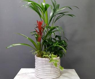 Orquídea Everest: PRODUCTOS de Flores Madrid