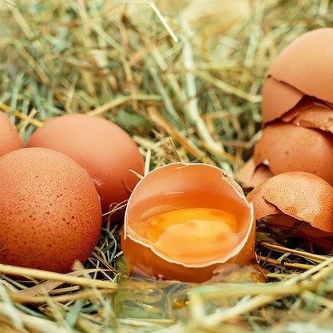 Las propiedades del huevo
