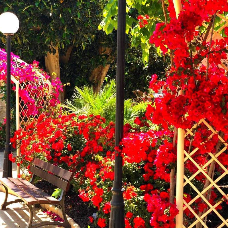 Mantenimiento de jardines en Cartagena