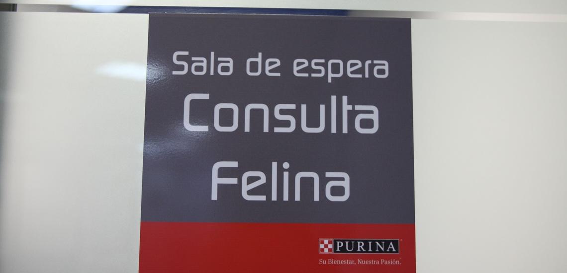 Consulta veterinaria felina en Sevilla