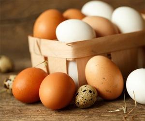 Distribución de huevos de marca propia en Albacete