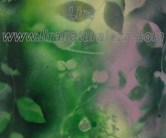 Título: 'Luz en el bosque' Medidas 62x43  Obra enmarcada, técnica mixta sobre papel