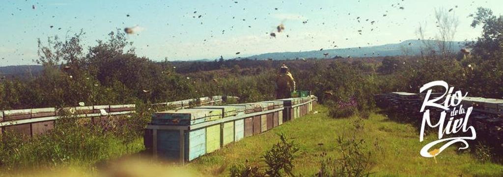 Miel de abejas Cantabria