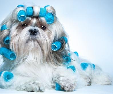 Promoción en peluquería canina