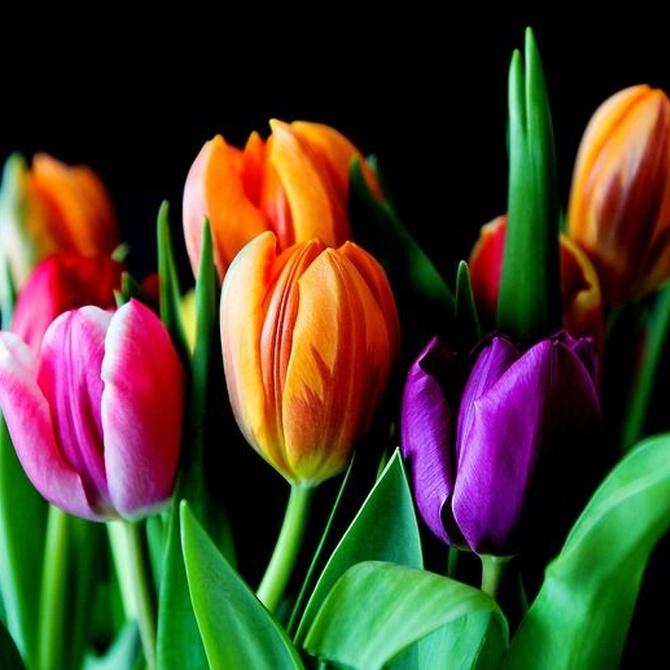 Flores en tu vida