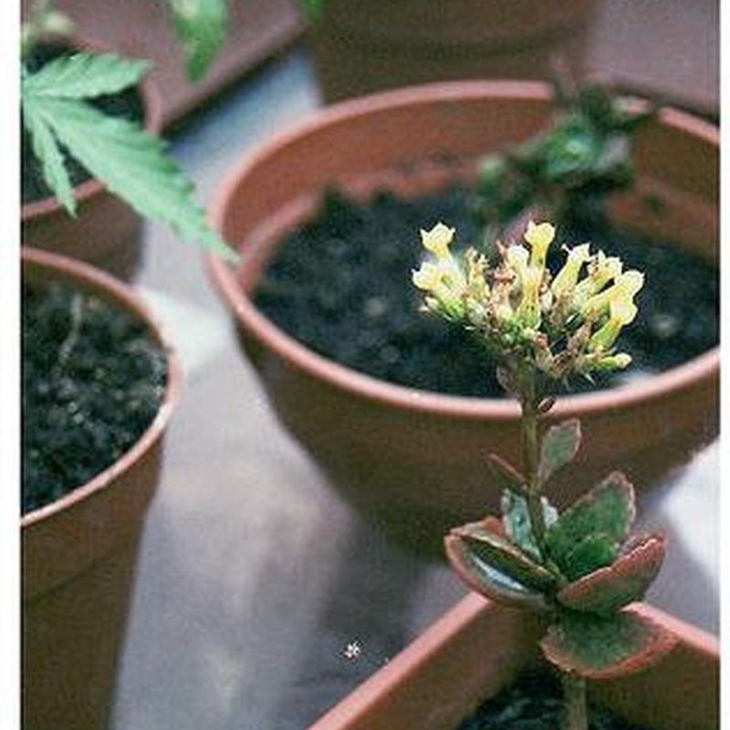 Turbas: Productos y Servicios de Jardines Patxi Lorategiak