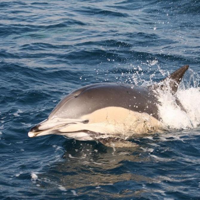 El avistamiento de delfines