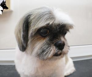 peluquería canina sants