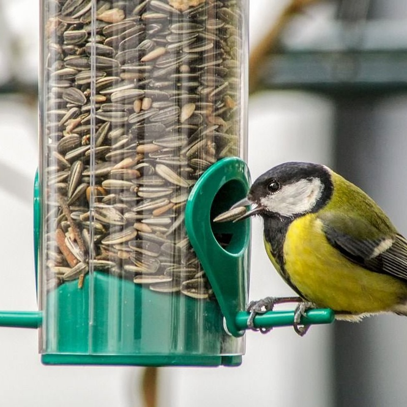 Aves: Productos y Servicios de Amazonas 1