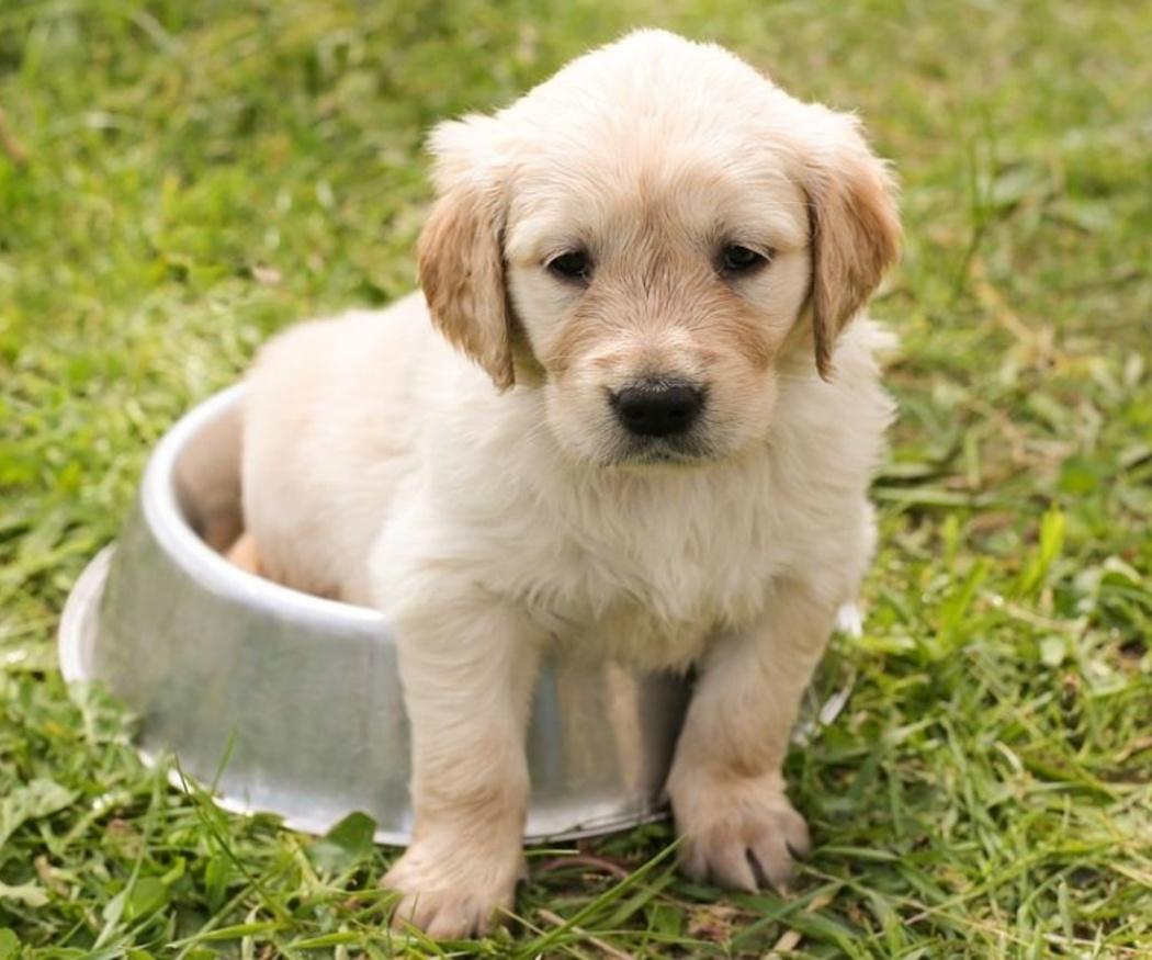 La frecuencia con la que debe comer un perro