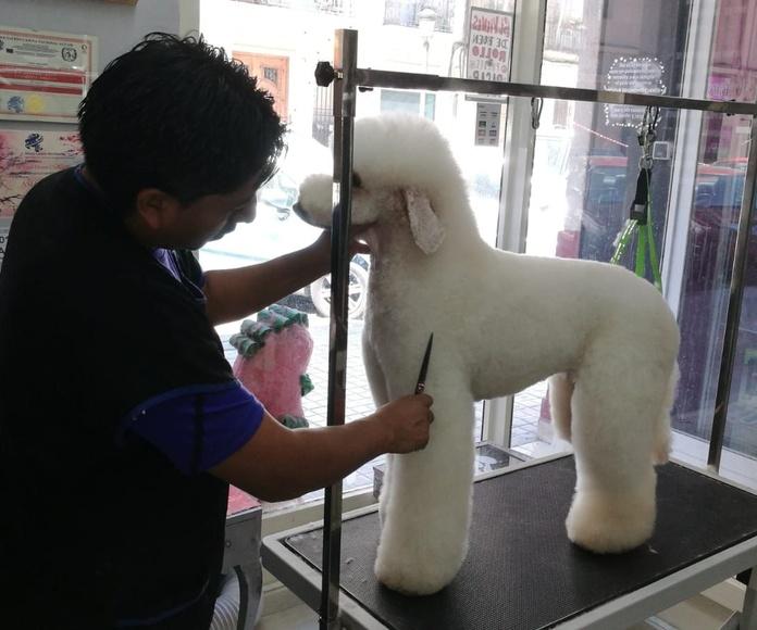 Cursos peluquería canina: Servicios de Sir Can, Estilismo Canino