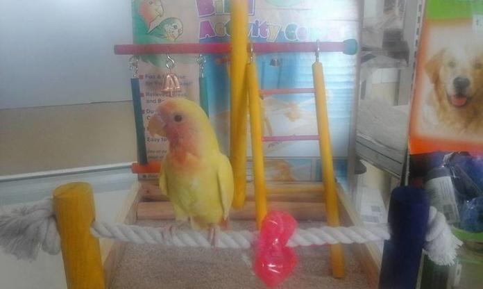 Aves: Productos de Avifauna Tienda Animal