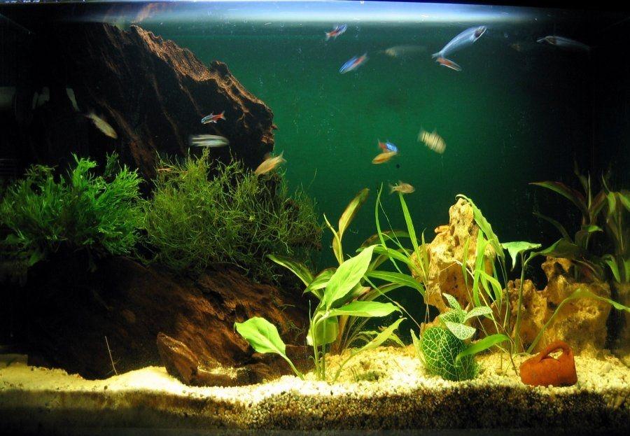La alimentación de los peces de acuario