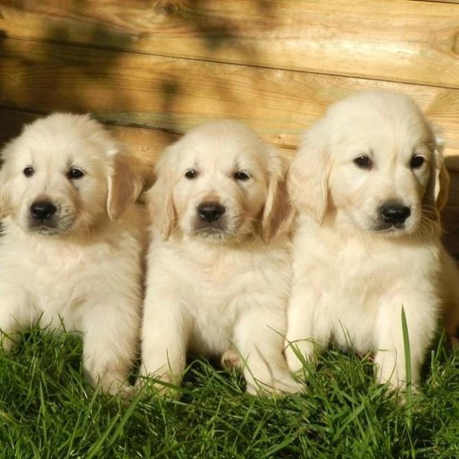 Cuidado en verano con los golpes de calor de las mascotas