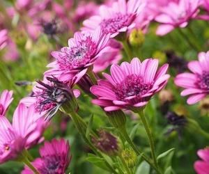 Simbología de las flores