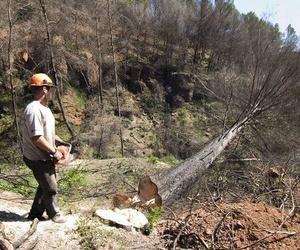 Especialistas en tala de árboles
