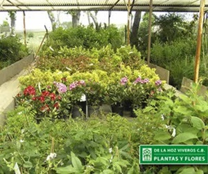 Vivero de plantas San Sebastián de lo Reyes | De La Hoz Plantas y Flores