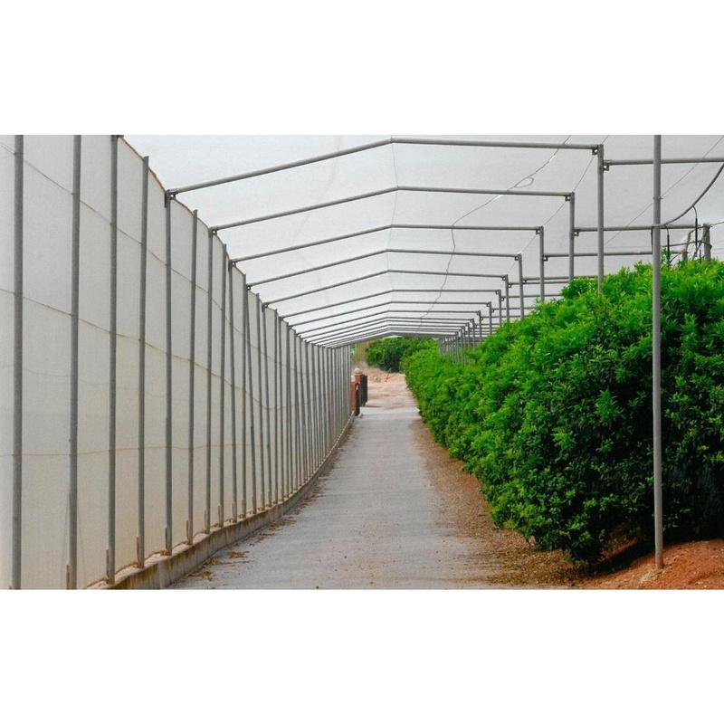 Túneles para caminos: Invernaderos de Invernaderos Campos