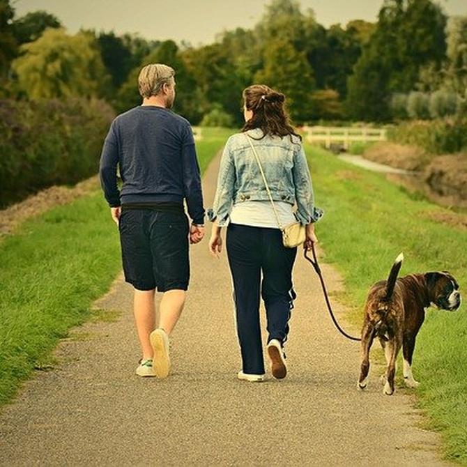 Cuidados específicos del perro anciano