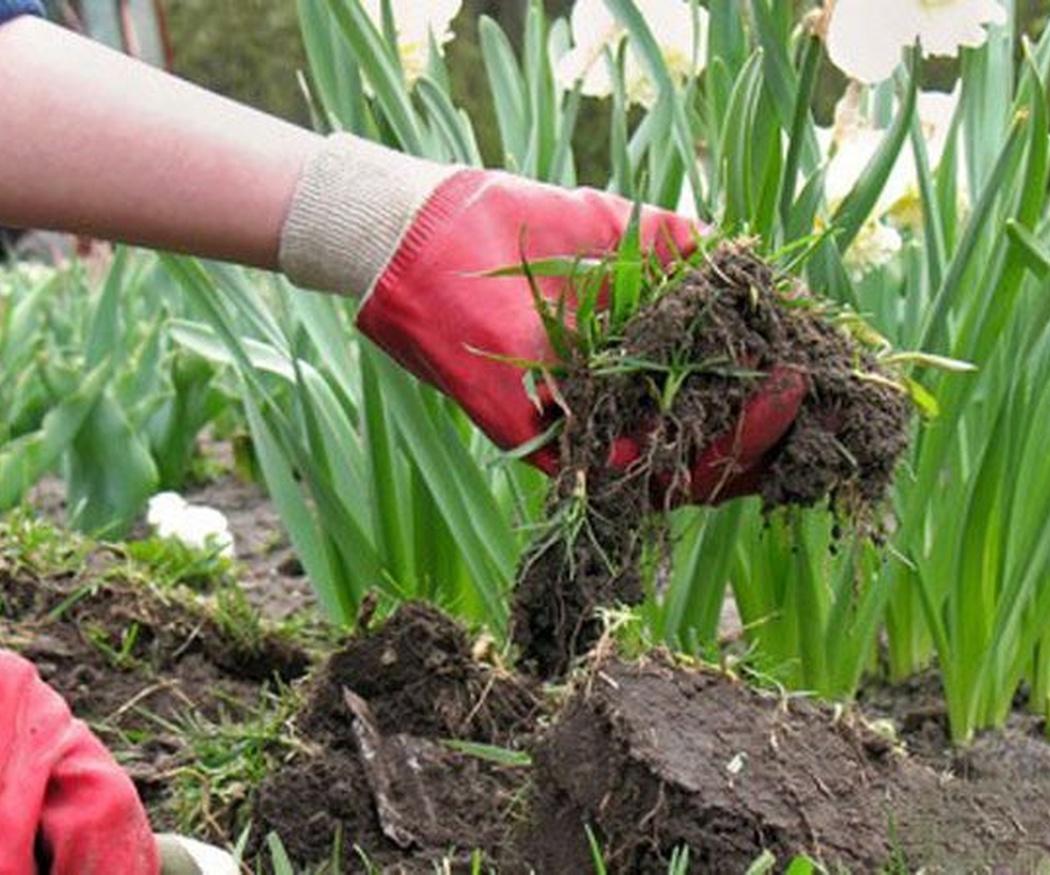 Cómo transplantar una planta