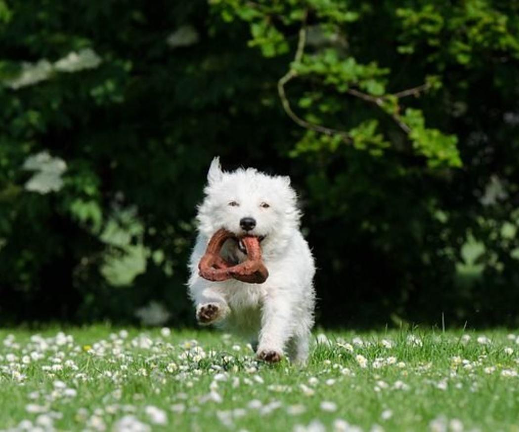 La manera de premiar a tu perro