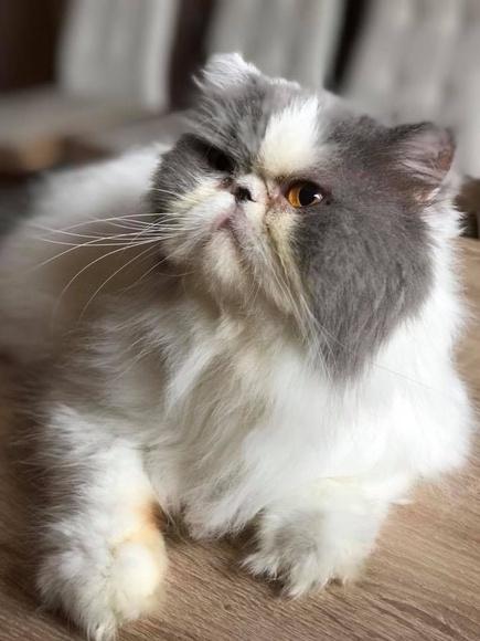 Peluqueria felina: Servicios de Dama's