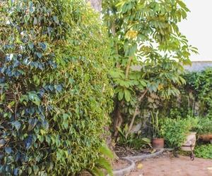 Mantenimiento diario de jardines