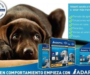 Adaptil ayuda a tu perro a estar más tranquilo