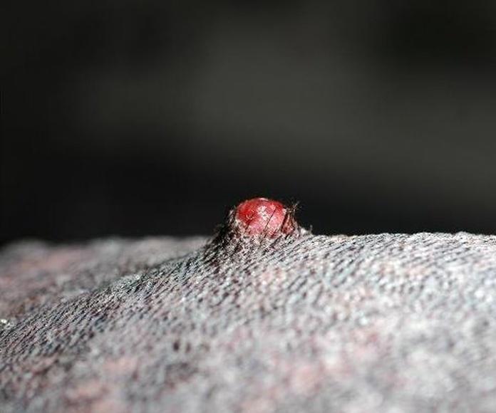 Dermatología: Servicios de Anubis Clínica Veterinaria