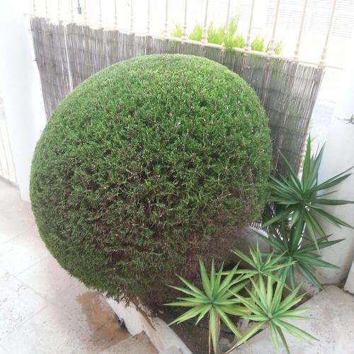 Mantenimiento de jardines en Almería